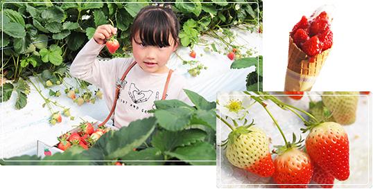 池田いちご園の写真