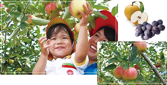 多田りんご園の写真