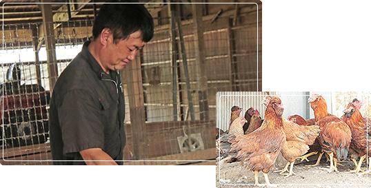 みやざき地頭鶏(じどっこ)の写真